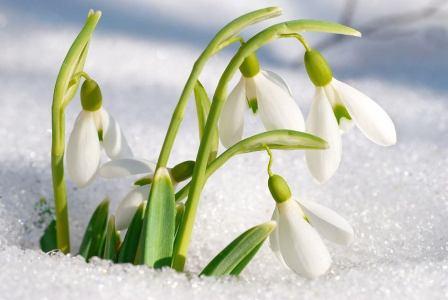 Сохраним Первоцветы!!!